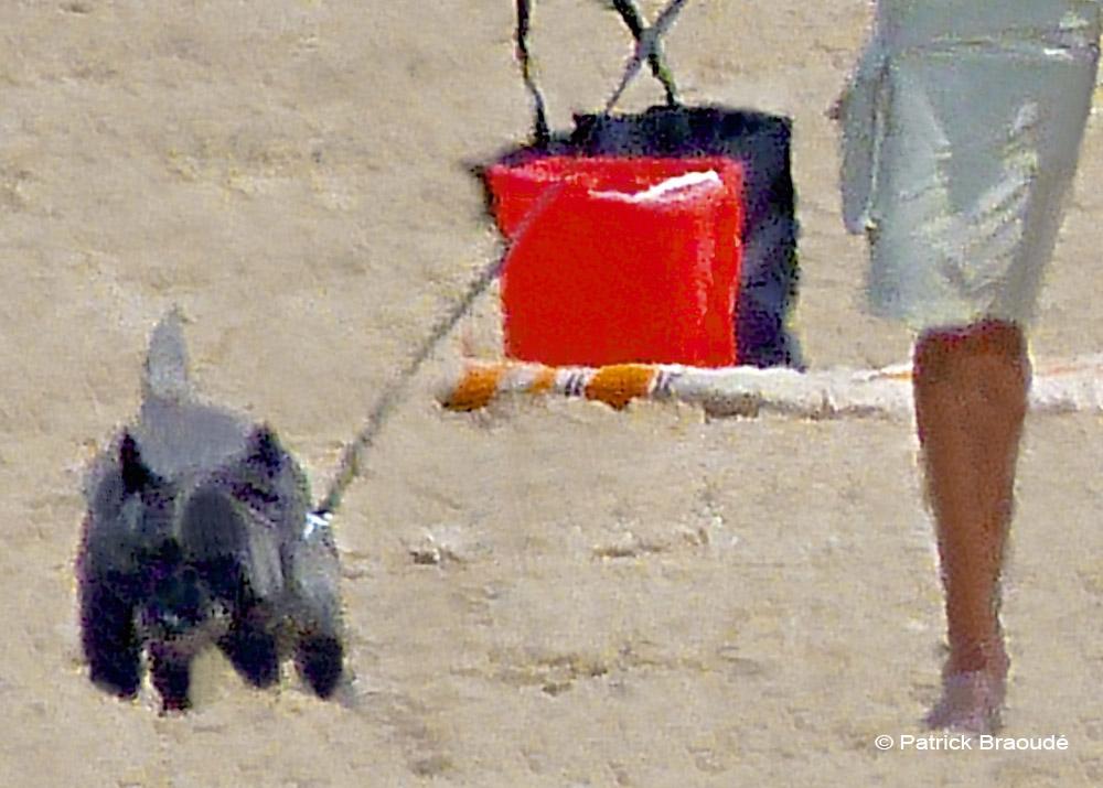 L'élégante au chien gris noir
