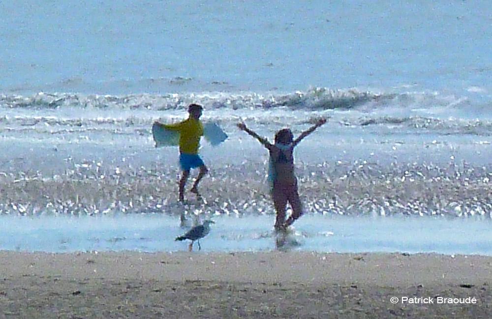 Vole l'oiseau, vole